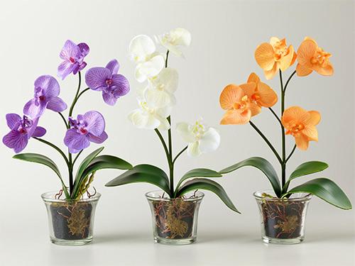 стеклянные цветочные горшки - steklyannye tsvetochnye gorshki