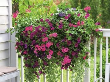 выращивание растений на балконе - vyraschivanie rasteniy na balkone