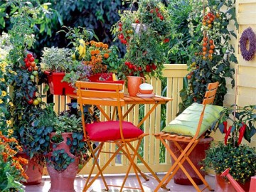 уход за растениями на балконе - uhod za rasteniyami na balkone