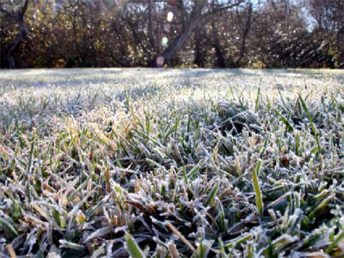 газон зимой - gazon zimoy