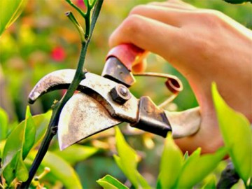 обрезка деревьев - obrezka derevyev