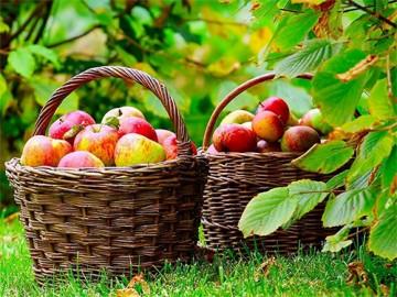 календарь огородника и садовода - kalendar ogorodnika i sadovoda