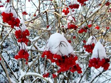 календарь огородника и садовода на декабрь - kalendar ogorodnika i sadovoda na dekabr