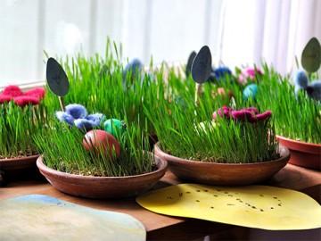 декоративная трава в горшке - dekorativnaya trava v gorshke