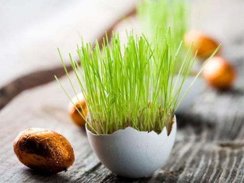 трава в яичной скорлупе - trava v yaichnoy skorlupe