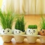 Декоративная трава в горшках