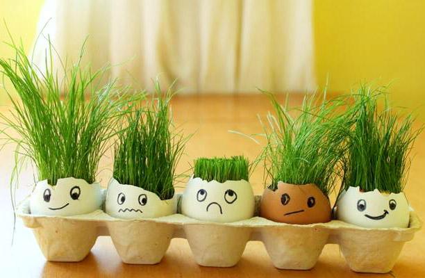 декоративная трава в яичной скорлупе - dekorativnaya trava v yaichnoy skorlupe