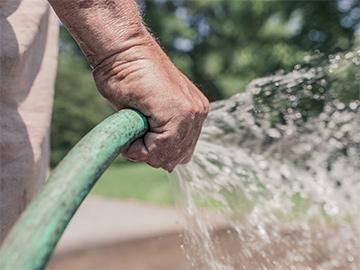 как поливать деревья