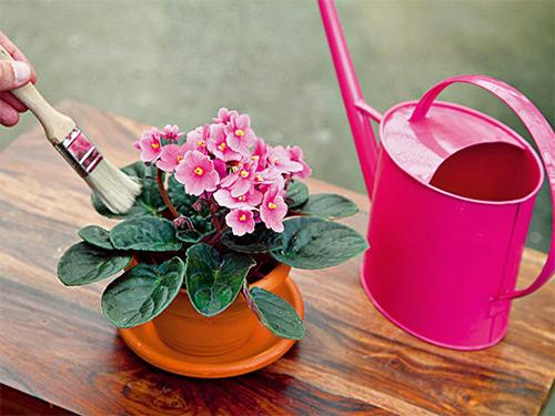 очищайте листья кисточкой