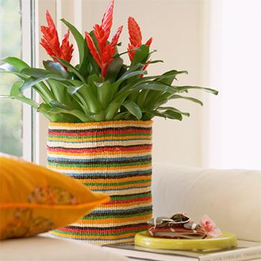 подкармливайте комнатные растения
