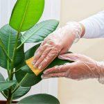 Уход за комнатными цветами: почва и полив